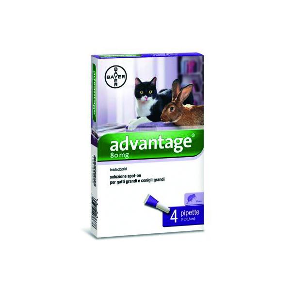 Advantage 80 gatti - Bayer Image